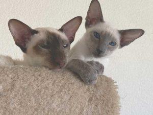 Two Felines